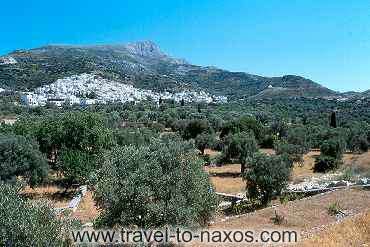 FILOTI - Filoti village is found to a region with olive groves.