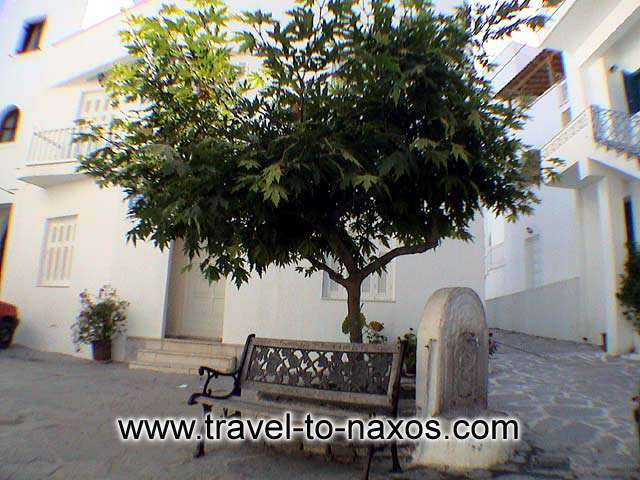 A nice spot in Naxos town. Relax under the shadow of a tree. NAXOS PHOTO GALLERY - BOURGOS