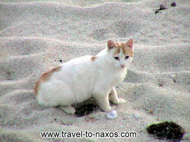 KASTRAKI BEACH - A cat playing on the beach.