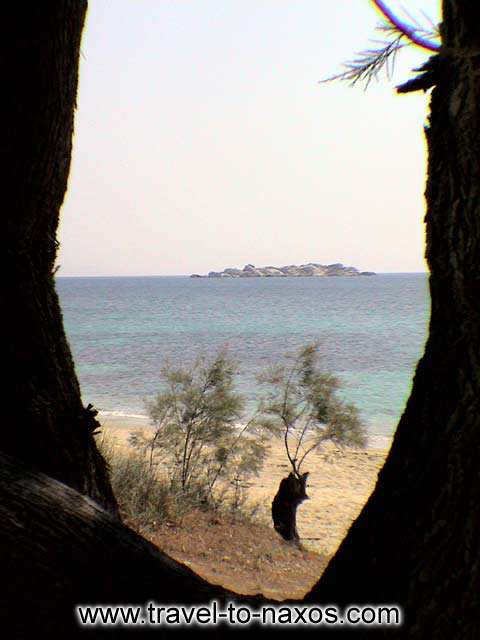 TREES - Trees on the beach of Plaka in Naxos